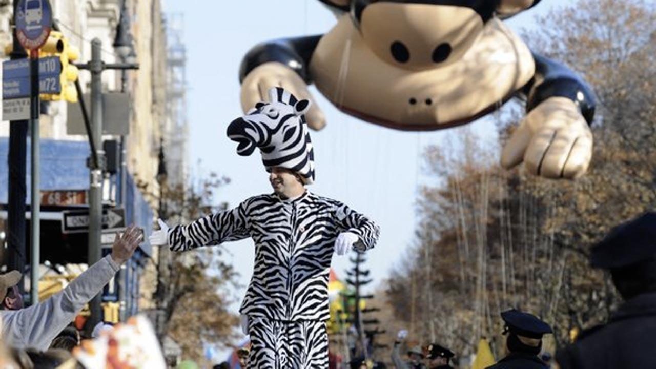 Stilt Walkers Zebra